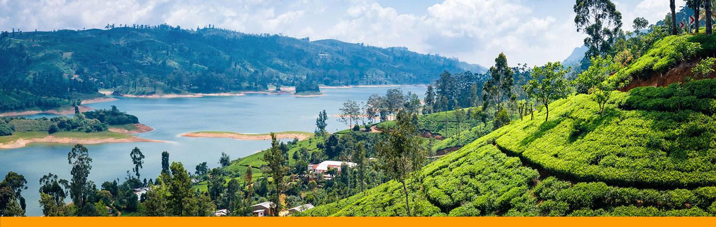TEE-MAASS - Ceylon Tee