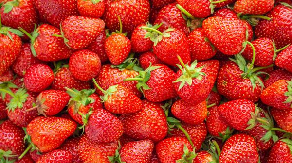 Erdbeere als Tee-Zutat