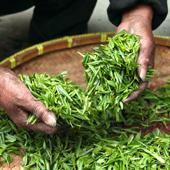 Tee und seine Herstellung